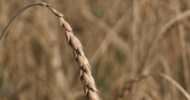 Kornkreis – Biolandbauern aus Süddeutschland
