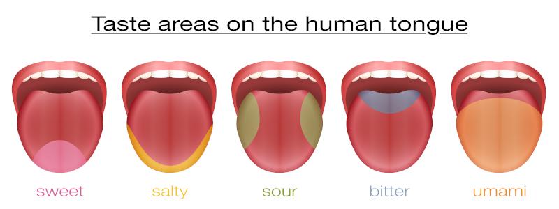 Bereiche-des-menschlichen-Schmeckens