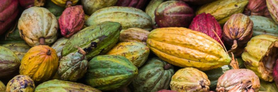 Rittersport setzt auf Nachhaltigkeit und Fair Trade Schokolade