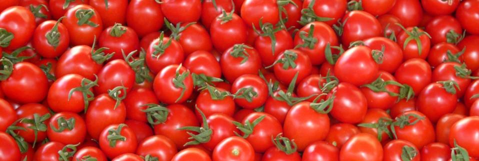 Tomaten entwickeln eine Schutzfunktion und verwandeln Raupen in Kannibalen