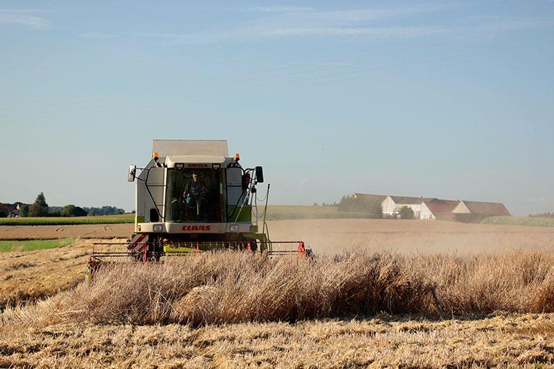 alte Getreidesorten von der Drax Mühle