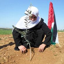 Olivenölbaum für Palästina von Conflictfood