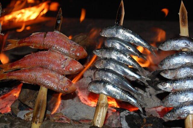 Sardellen-Futterfische
