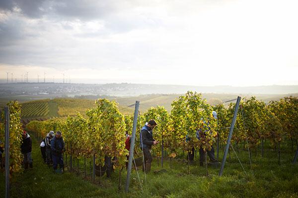 Geradlinige Weine vom Weingut Winter