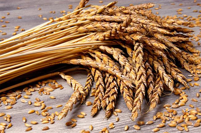 Alte italienische Getreidsorten: Kamut & Senatore Cappelli